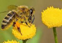 زنبور عسل و اهمیت آن در ادیان مختلف