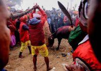 برگزاری بزرگترین جشنواره «خونین» جهان در نپال