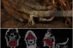 صدای کاهن مومیاییشده مصری پس از سه هزار سال شنیده شد