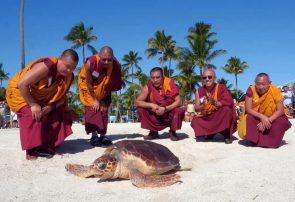 راهبان بودایی تبت در حال تماشای لاکپشت ۷۷ کیلویی اقیانوس اطلس